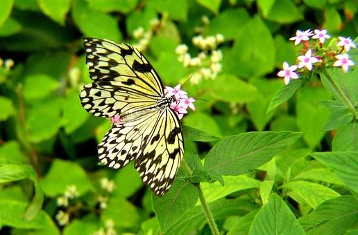 butterfly-799153__340.jpg